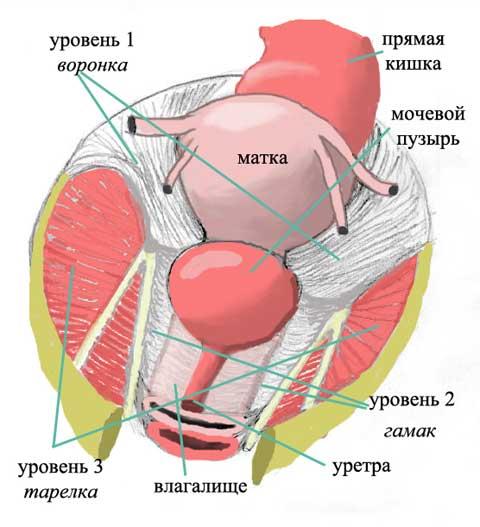 vlagalishe-i-meditsina